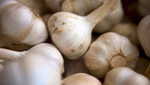 Growing garlic in your strawbale