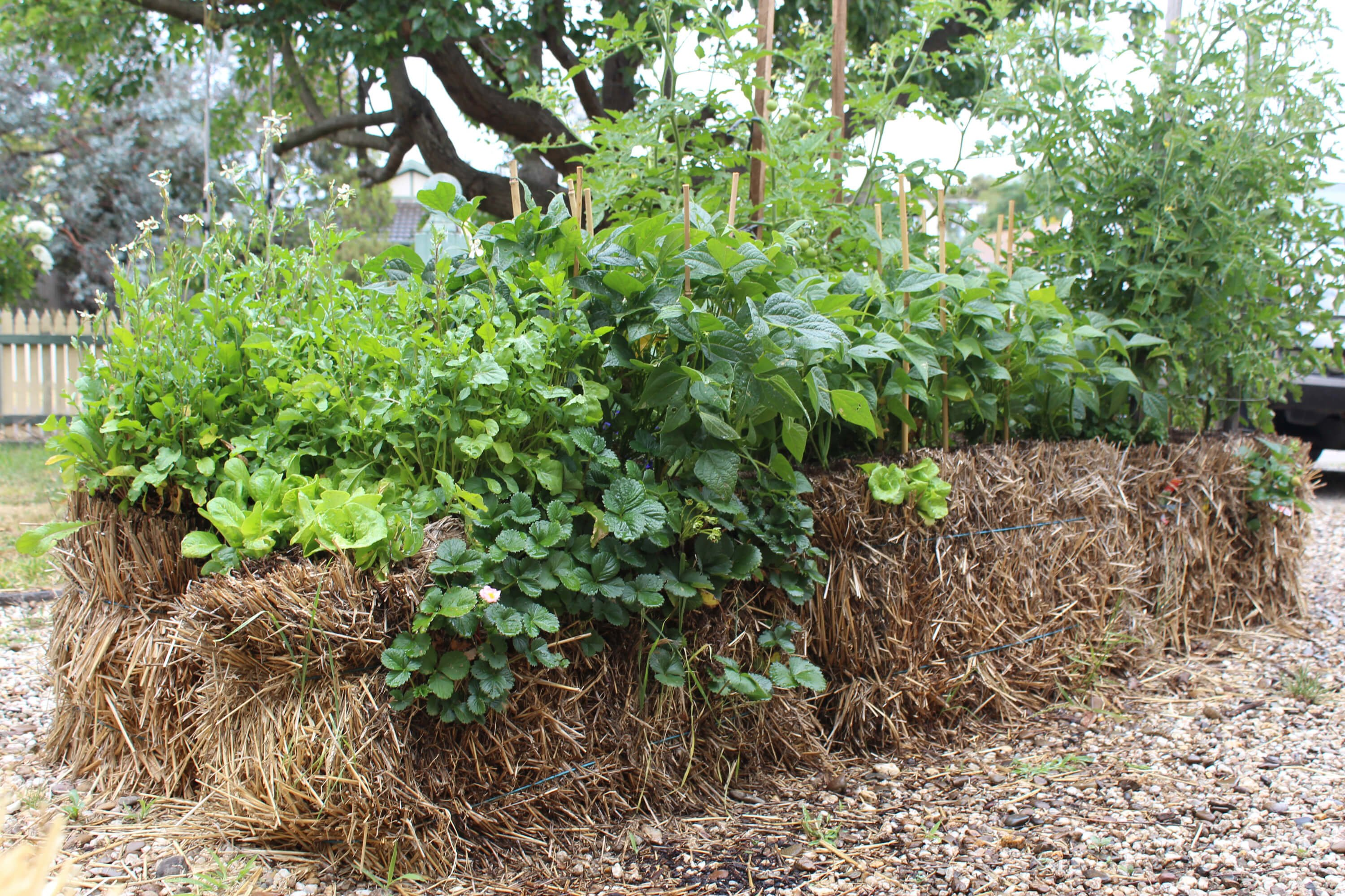 Strawbale garden - Balegrow early learning program
